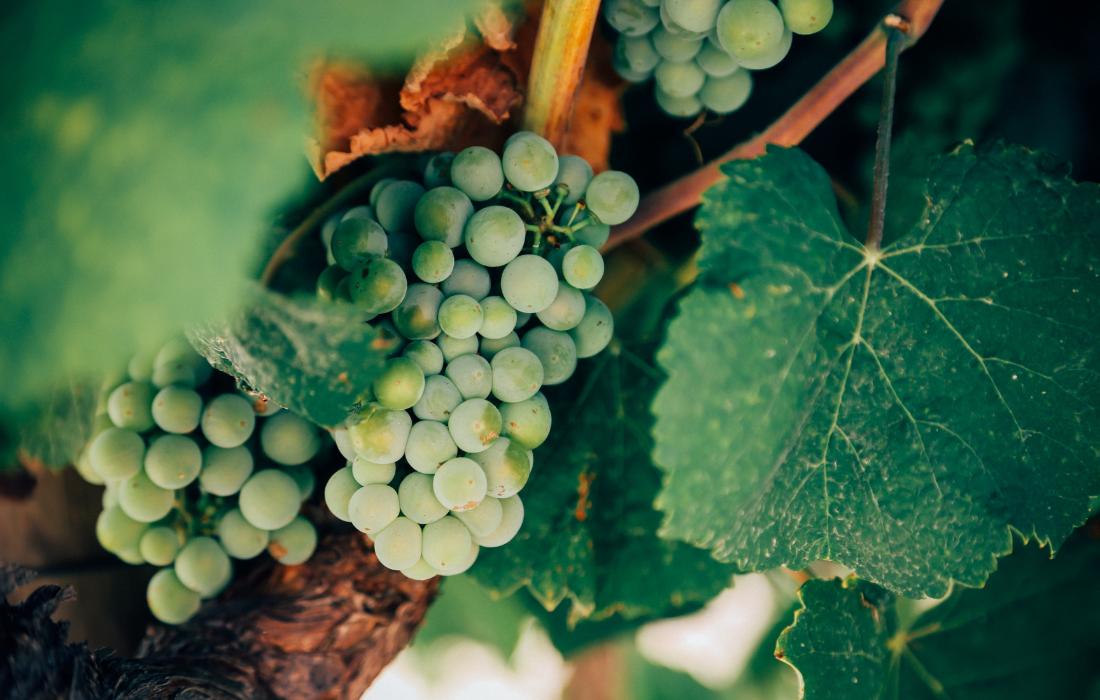 Private Wine Tour Loire France