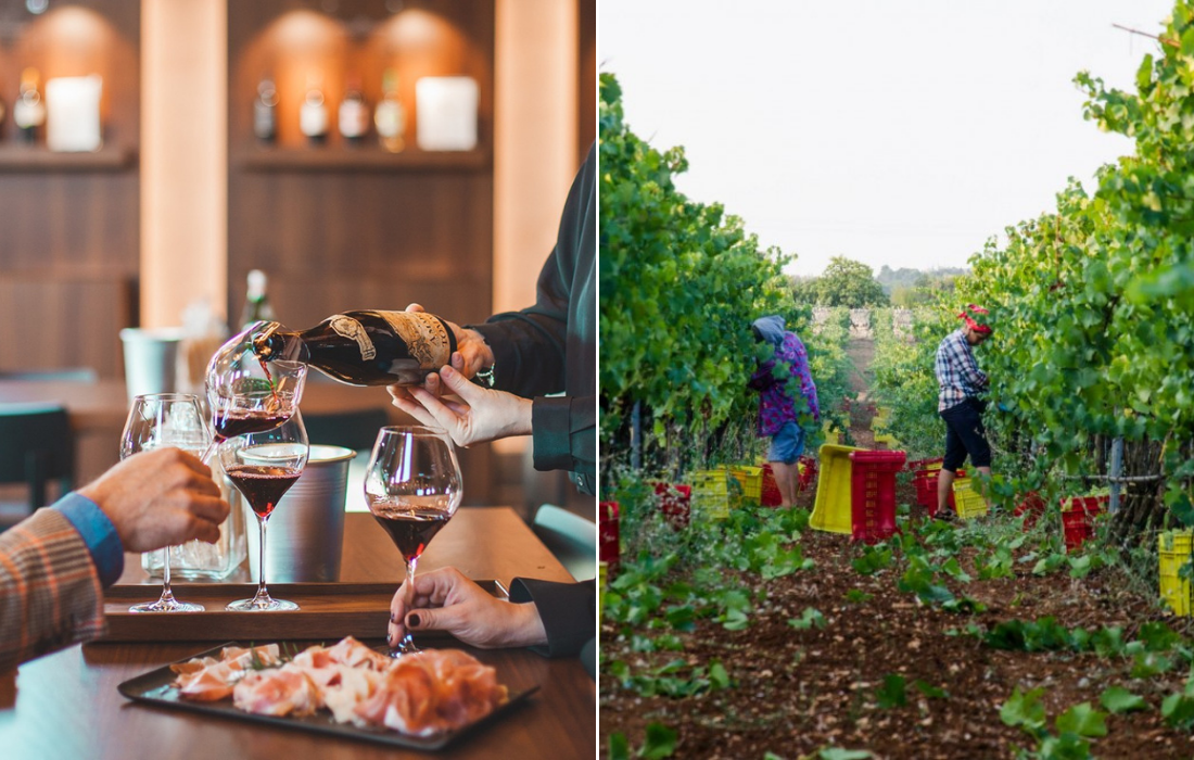 Private Wine Tours in Italy