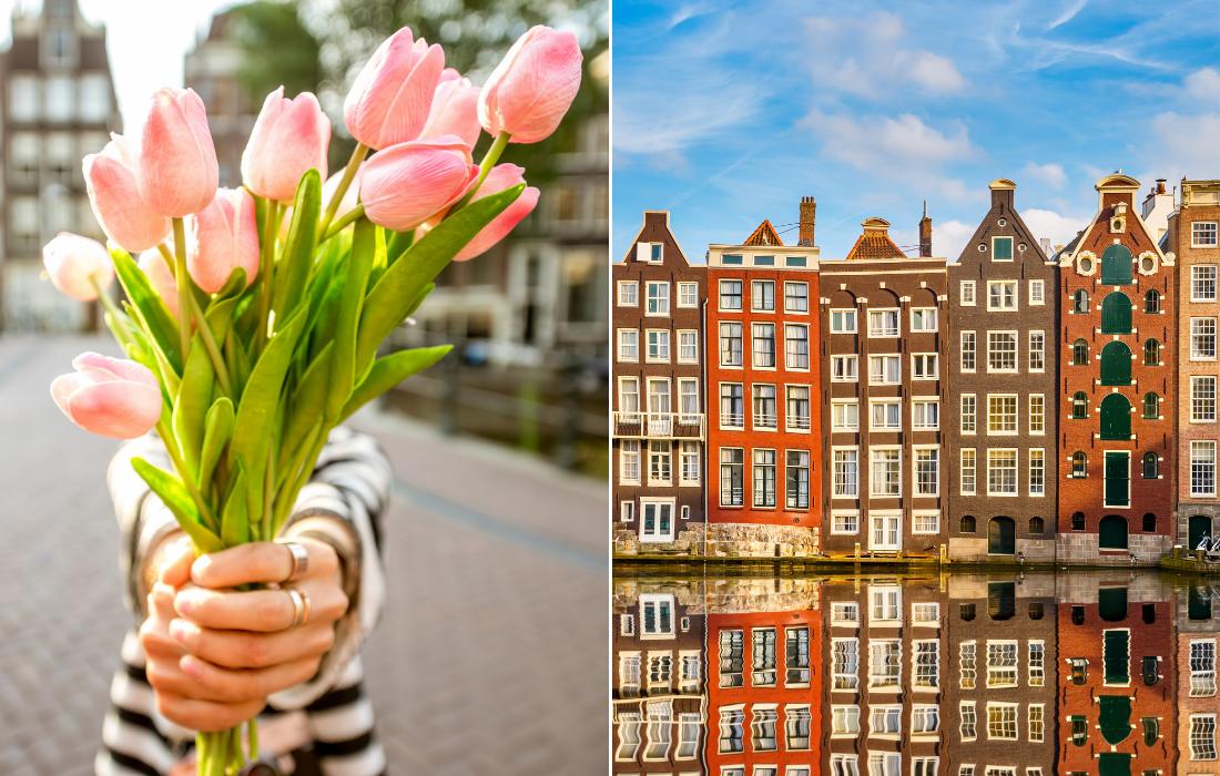 Best Tulip Tours Amsterdam