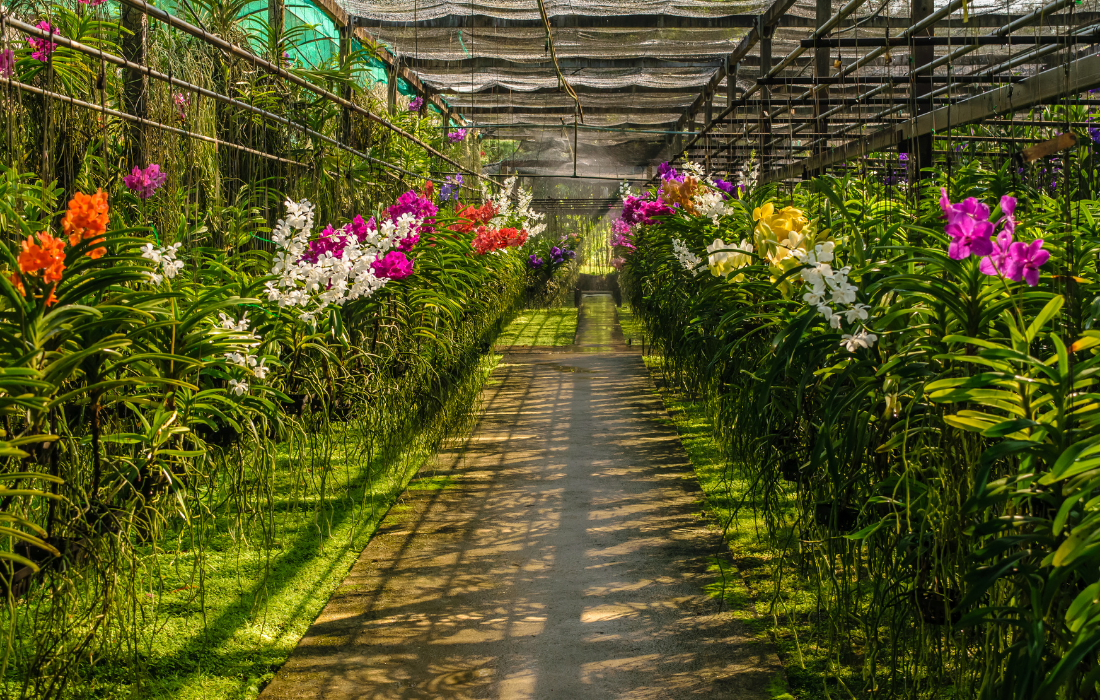 Best Orchid Tours Amsterdam